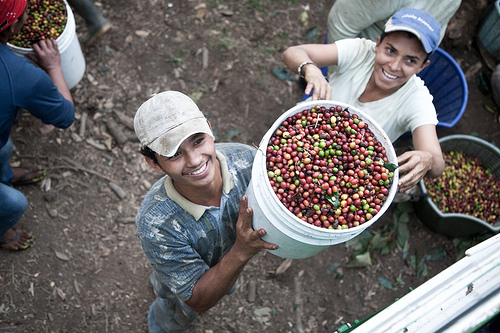 coffee fair trade essays It covers the difference between fair trade and direct trade,  a solid collection of essays that use coffee as a means to discuss philosophical topics from.