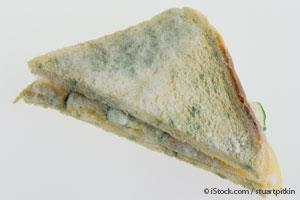bread mold imrad essay Many common molds can grow on bread, fruit, and other food the black bread  mold often forms a cottony, soft, white growth on damp bread the mold gets its.