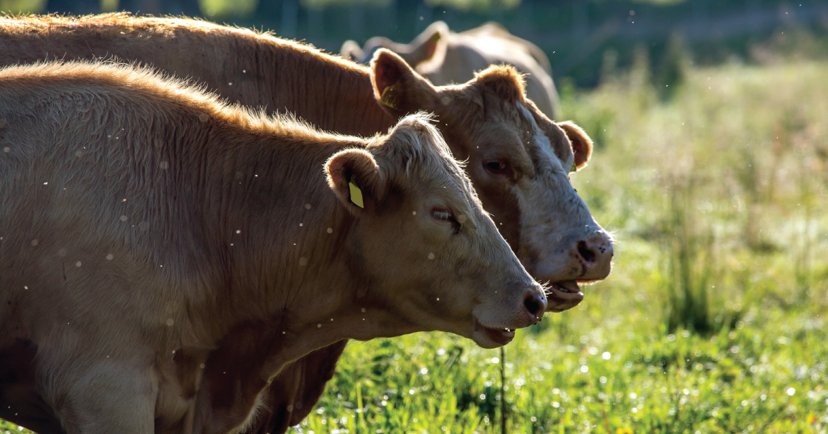 Why Fake Meat and Eliminating Livestock Are Really Bad Ideas