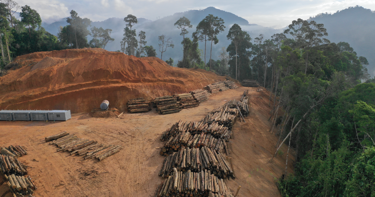 'We Are Literally Sawing off the Branch We All Live On:' Amazon Deforestation Increasing Under Bolsonaro