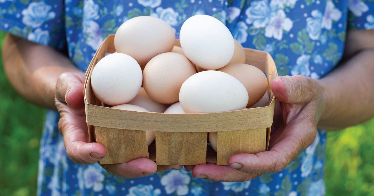 Is the Future of Eggs in Family Farms?