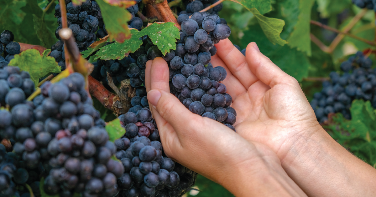 In Oregon Wine Country, One Farmer's Battle to Save the Soil