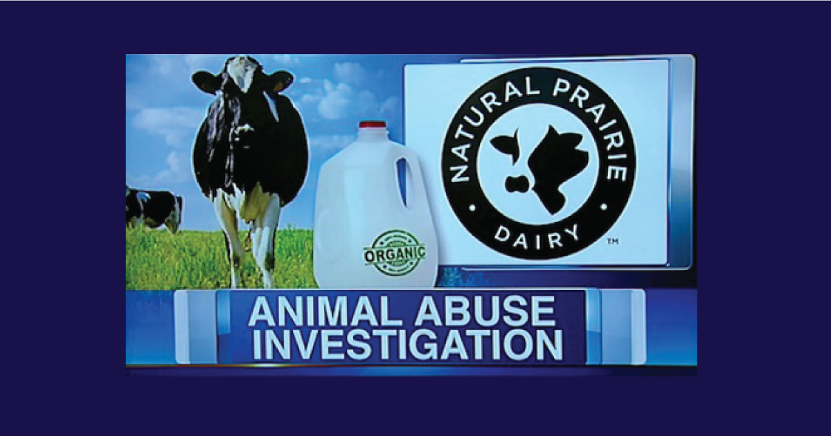 Another Scandal With an Organic Dairy Mega-Farm Should Serve