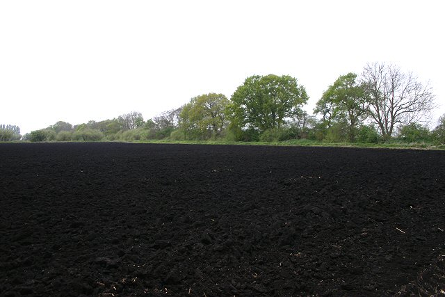information on black soil There is a large black market for the soil in ukraine, where it is known as chornozem (ukrainian: чорно́зем, translit chornózem ) the sale of agricultural land has been illegal in ukraine since 1992, but the soil, transported by the truckload, has approximately us$900 million annually in black market sales.