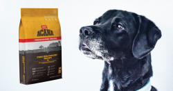 A photo of a package of Acana pet food next to the head of a black dog