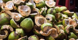coconut shell and husk agricultural waste