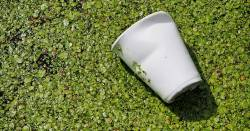 Plastic cup floating in water and green algae