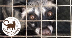 Photo of an Asian civet cat behind bars with the Kopi luwak coffee logo