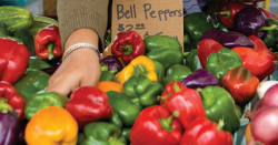 Bell peppers being sold at a farmers market.