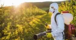 A farmer outdoors in orchard at sunset, using pesticide chemicals.
