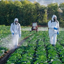Farmers spraying pesticide in a field