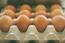 Brown eggs in the row of a carton