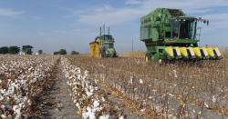 Cotton field with big machinery.
