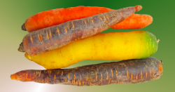colorful assortment of carrots