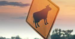 cattle road sign