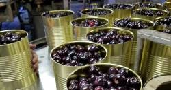 canned cherries in a factory