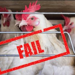 chickens in a factory farm cafo cage with a red FAIL stamp