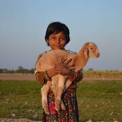 Child holding a baby goat on a farm field