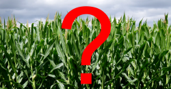 red question mark over image of corn field