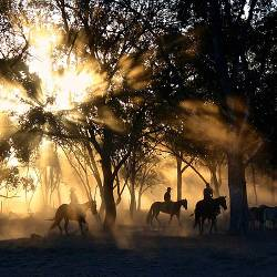 People on horseback herding cattle through a foggy forest at sunrise