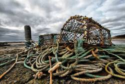 Crab and lobster trap