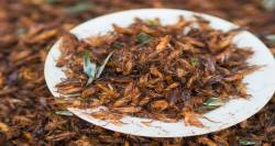 Crickets on a plate served for lunch