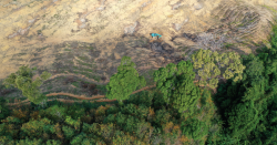 Deforestation from above.