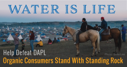 Defeat the Dakota Access Pipeline