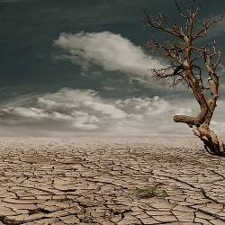Dry dead tree in the middle of an arid desert
