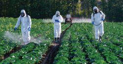 People spraying pesticides.