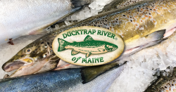 Ducktrap of Maine logo over a photo of salmon