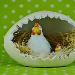 Chickens inside an egg