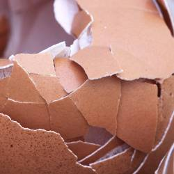 Crushed and broken brown chicken egg shells