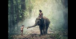 Man rides elephant through the jungle