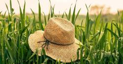 straw hat in a farm field