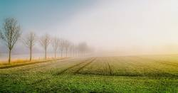 Agricultural farm field at sunrise surrounded by fog