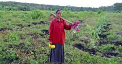 Indian woman in a crop field with a harvest