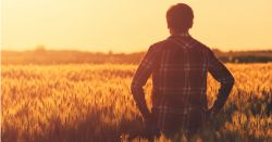 farmer in a flannel shirt standing in a wheat crop field on a farm at sunset