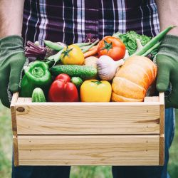 farmer holding a wooden box filled with peppers tomatoes and other vegetables from harvest