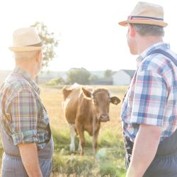 two farmers looking at a cow in a field on a farm