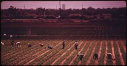 Farm workers in California