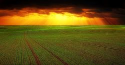 agricultural field stretching to the horizon