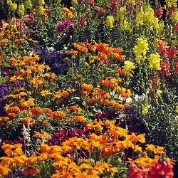 A diverse meadow of wild flowers in full color