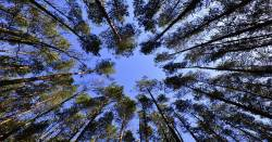 looking upward through branches and leaves of trees at a blue sky