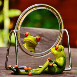 Frog looking at its reflection in a large mirror