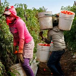 Time to Hold Corporations Accountable To Farmworkers