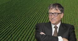 Bill Gates in front of crops.