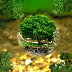 Tree coming out of a globe in a forest