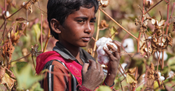 A child holding cotton.