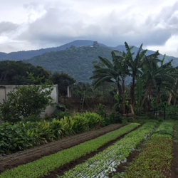 farm in Guatemala